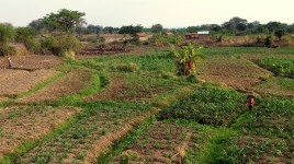 10 Tanzania rejon upraw rplnych