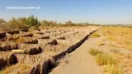 15- pustynia Kara-kum, umocnienia drogi