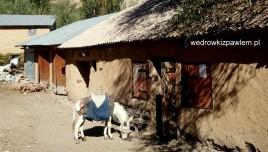 18- sklep w wiosce k. jeziora szóstego