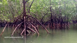 06- Phuket, mangrowce