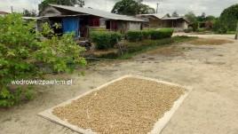 15- suszenie orzeszków ziemnych