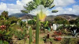 01- górzysta Saint Kitts