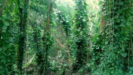 12- Niue