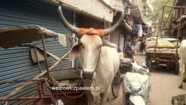 18- Delhi, Pahar Ganj