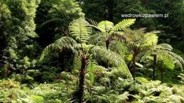 20-paprocie-drzewiaste