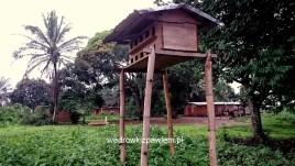 kongo-03-ngongo