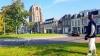 Holandia, Leeuwarden, królik na spacerze przy krzywej wieży Oldehove