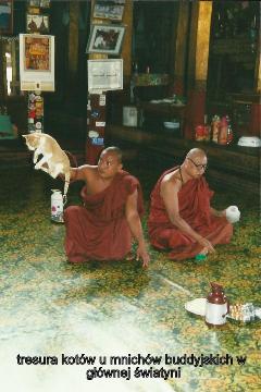 tresura kotow, u mnichow buddyjskich, w glownej swiatyni,