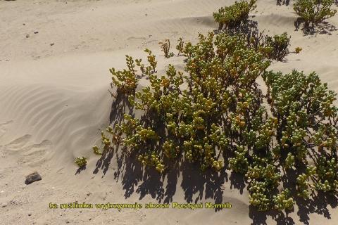 fish river canion,luderitz,pustynia namib,drzewa litops,swakopmunt,wydmy sesriem,