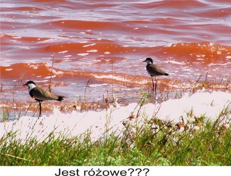 rozowe jezioro,dakar,