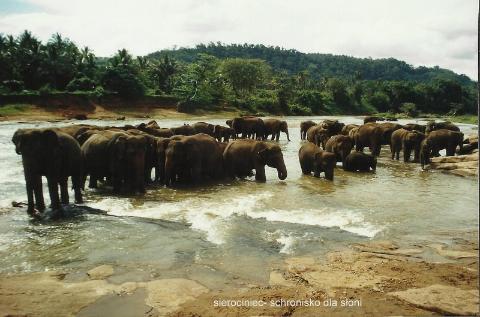 sierociniec, schronisko dla sloni,