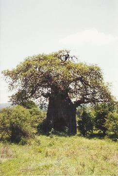 Afryka, wielki row afrykanski, ngoro ngoro, antylopy,gnu, wycieczka , tania, prelekcje, spotkania, podroznicze,