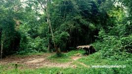 Kamerun, Pigmeje, chatka-pigmejow-w-buszu