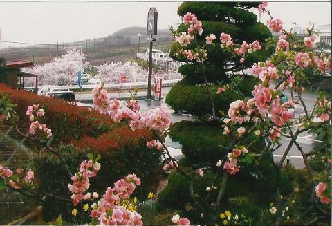 kwitna wisnie i nie tylko,wyspy Japonskie,Tokio,Kioto, Expo,palac cesarski,podroze,lodzianin,