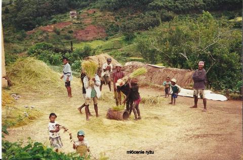 mlocenie ryzu,ocean indyjski, wyspa,antananariva, lemury,podroze,filmy podroznicze,