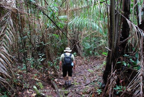 tropikalna dżungla,podróżować daleko i blisko,globtroterzy,polscy podróżnicy, wyprawy,wędrować dalej i bliżej,