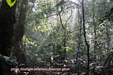 ściezka lowcow glow, daleki wschód,egzotyczne miejsce, tropikalna dżungla,podróżować daleko i blisko,globtroterzy,