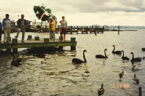 jezioro z czarnymi labedziami w centrum ROTORUA,Pacyfik, wyspa,auckland,Rotorua, park wulkanow,podroznik polski,