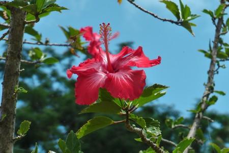 polinezyjska nastrojowa muzyka,girlandy kwiatów na szyi,środek Pacyfiku,ocean spokojny, podróż na koniec świata, dookoła globu,podróż marzeń,podróżnik,Paweł Krzyk,
