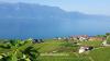 11. Lavaux, tarasy winne, Unesco