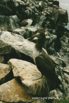 endemiczne ptactwo,zolwie galapagos, spotkanie,prelekcja,film, podrozniczy, gdzie podrozowac, pawel krzyk,