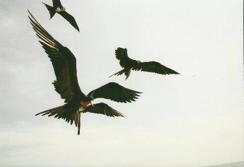 zolwie galapagos, spotkanie,prelekcja,film, podrozniczy, gdzie podrozowac, pawel krzyk,