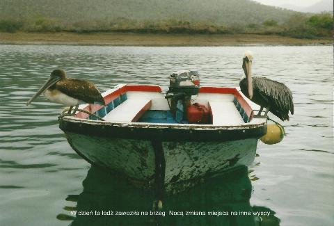 W dzien ta lodkazolwie galapagos, spotkanie,prelekcja,film, podrozniczy, gdzie podrozowac, pawel krzyk, zawozila na brzeg. Noca zmiana miejsca na inne wyspy.